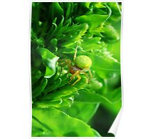 Green Spider 2.0 Poster