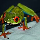 4 AM red eye froggy by Sylvain Dumas
