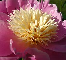 Happy June 1st! Peony Time by MarianBendeth
