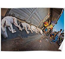 Slum dogs Mumbai Poster