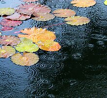 Rain on Lily Pond 1 by tdash