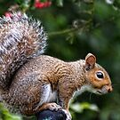Squirrel On My Washing Line by lynn carter