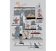 The Ultimate Pet Shop Photographic Print