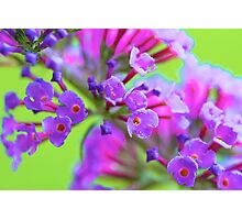 Butterfly Bloom Photographic Print