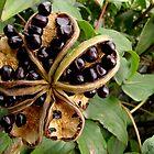 Berries by Hannah Ruth