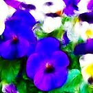 Pansies by shalisa