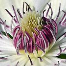 Clematis Close Up by Chris Monks