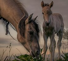 Youngster by Henri Ton