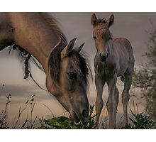 Youngster Photographic Print