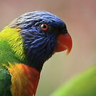 Portrait of a Rainbow Lorikeet by aussiebushstick