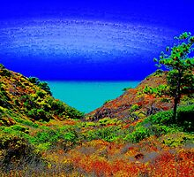 The Rare Torrey Pine by ChrissieBee