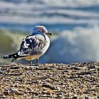 Gull Soaking in the Sun by Lightengr