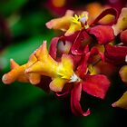 Botanical Garden Edit 7 by TyTheTerrible