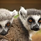 Lemur Love by FranJ