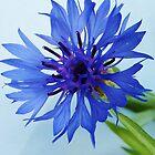 Blue Wonder by Monte Roberts