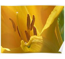 On Limpid Stamen Shoe-trees Poster