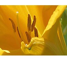 On Limpid Stamen Shoe-trees Photographic Print