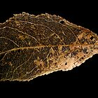 Skeleton Leaf by Marvin Hayes