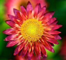 Flower Power by Renee Hubbard Fine Art Photography