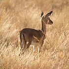 No..I'm not Bambi  by Shaun Colin Bell