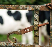 Cow 'n Gate, Kilmokea Gardens, County Wexford, Ireland by Andrew Jones