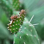 Cactus by Hilda Rytteke