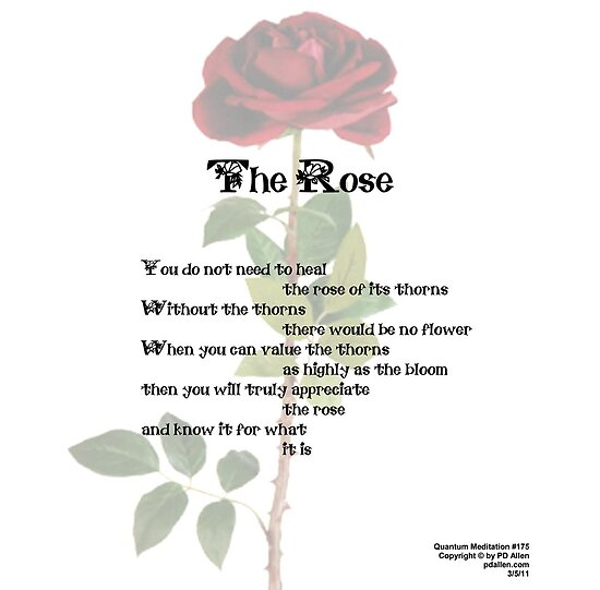 The Rose by PDAllen