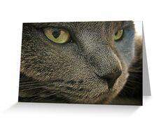 Mia The Cat Greeting Card