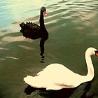 A Pairing of Swans by J Bonanno