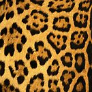 Leopard iPhone Case by Jnhamilt