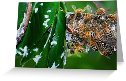 Honey Bees & Beeswax by Laurie Minor