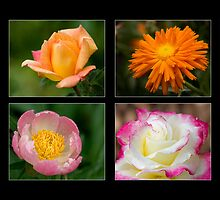 Collage of 8 pink and orange flowers by Jerry Deutsch