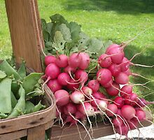 Farmer's Market Radishes by SheilaBailey