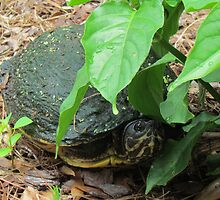Turtle Finding Shelter From The Rain by Cynthia48