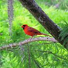Red Bird  by Cynthia48