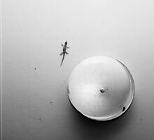 Gecko & Light in monochrome by AllshotsImaging