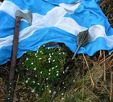 am i dreamin...huv scotland won a Rugby Match? by joak