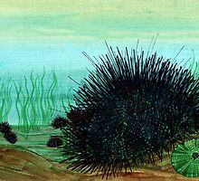 Sea urchin by joancaronil