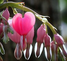Bleeding Hearts by Jean Gregory  Evans
