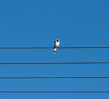 Bird on wire by Tony Theobald