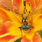 Dragonfly on Flower by Misty Lackey