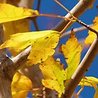 Fall Yellows and Reds by Monte Roberts