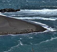 Where River Meets Ocean by Bob Wall