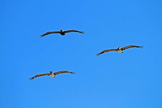Pelican Trio in Flight by Terri~Lynn Bealle
