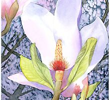 Magnolia blossom by Jacki Stokes