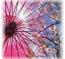 Cherry Blossom Square by John Dalkin