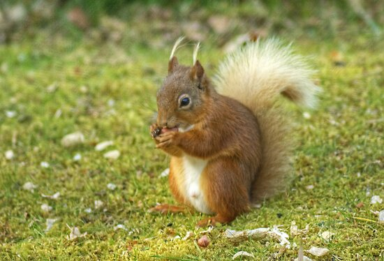 Little Willie Nibbles His Nuts by VoluntaryRanger