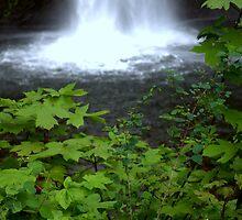 """""""Botton of the Falls"""" by Lynn Bawden"""