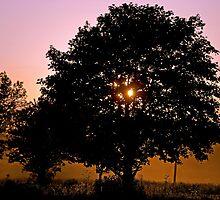 Dusty Twilight by Maria Dryfhout