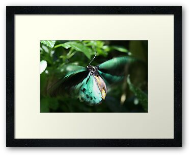 Jade Butterfly by Jason Dymock